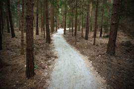 Suli woods na 25 zdjęciach
